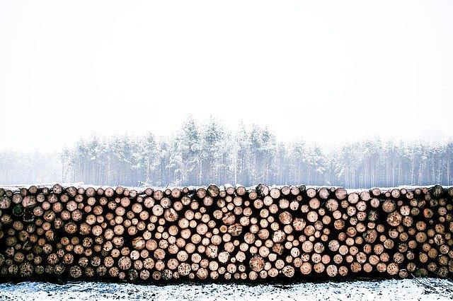 Pokácené stromy, kmeny poskládané na sobě, v pozadí les